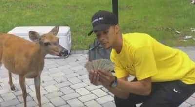 Watch A Short Documentary On Kelvin Peña, Money The Deer, And The Deer Squad
