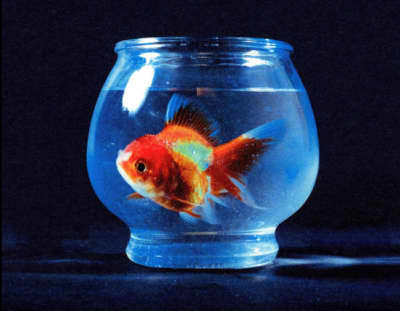Vince Staples May Have Posted Album Artwork and Release Date For Big Fish Theory