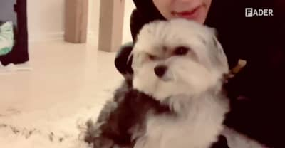 Digital FORT: Meet Sarah from Phantogram's very cute dog Leroy