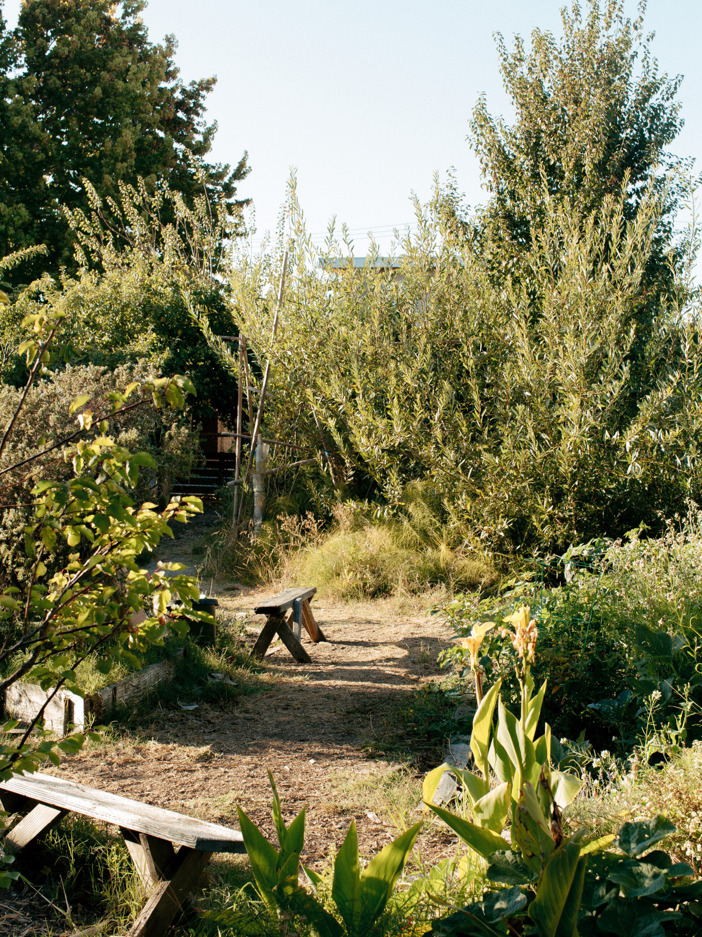 Making An Oasis In Oakland