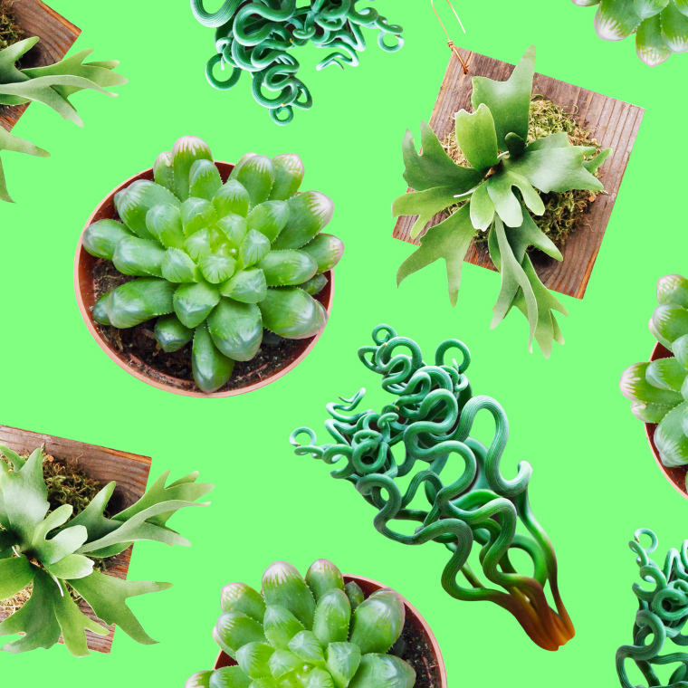 So You Want To Fill Your House With Weird Plants